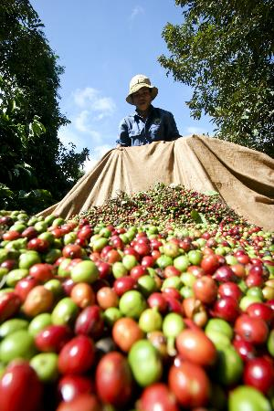 Coffee Vietnam face many uncertainties