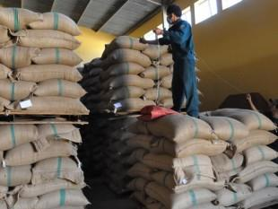 The amount of coffee inventories are still about 300,000 tons
