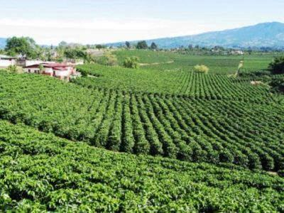 UCDA: coffee exports fell 18.28% in 2/2015