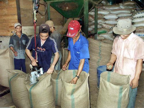 Vietnam: coffee exports up 42.8% in 12/2014