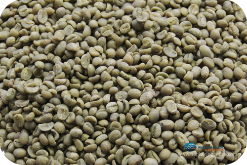 Washed Arabica - Screen 14
